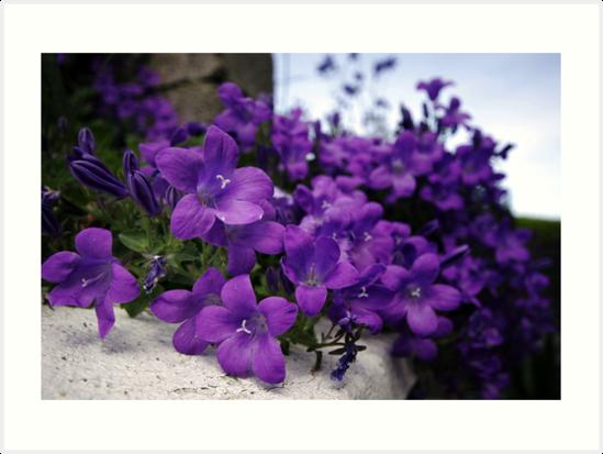 Purple Flowers by Donncha O Caoimh