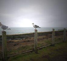 Seagulls at Dawn by Tristin