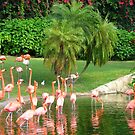 The Flamingoes by SBCStudio