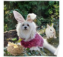 Snowdrop the Maltese - Ready for Easter Poster