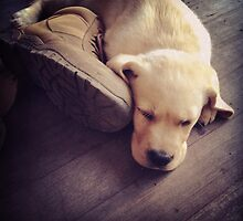 Labrador Puppy Sleep Next to Boot by Charlottepitch