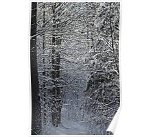 Snowy Hike Trail  Poster