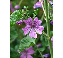 Lilac beauty Photographic Print