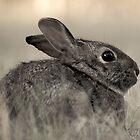 Rabbit 1 by Cliff Worsham