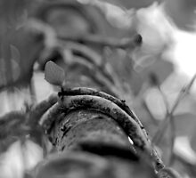 Vine by Cliff Worsham