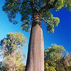 Bottle Tree - Western Australia by Marilyn Harris