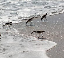lunching dowitchers by Roslyn Lunetta