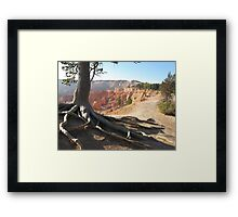 Five roots pointing to Bryce National Park  Framed Print
