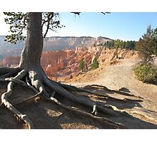 Five roots pointing to Bryce National Park  Photographic Print