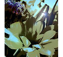 Retro Daisy Photographic Print