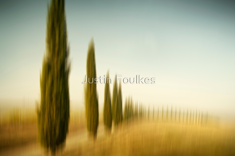 The Cypress Grove by Justin Foulkes