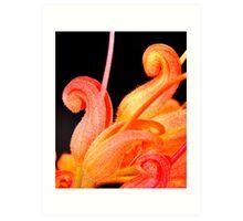 grevillea macro 2 Art Print