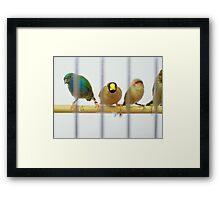 Caged Birds Framed Print
