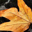 Sedona, Az - Fall leaf by Candy Gemmill