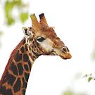 THE MATURED GIRAFFE by Magaret Meintjes