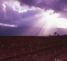 Fields of Light by Ben Messina