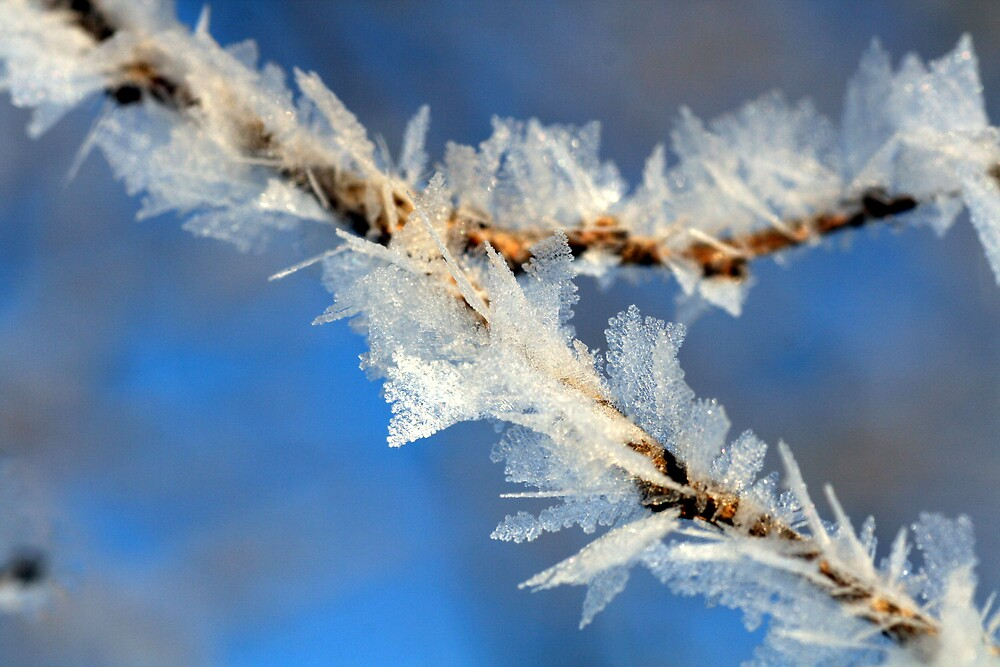 Ice Crystals on weeds by fotoeluver