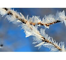 Ice Crystals on weeds Photographic Print