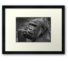 Why Are They Staring? Framed Print