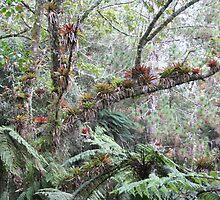 Bromeliads in Haiti by robinmoore