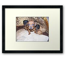 Puppies 1 Framed Print