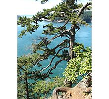 Deception Pass Water with Trees Photographic Print