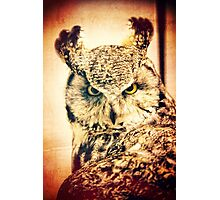 Great Horned Owl Vintage Portrait Photographic Print