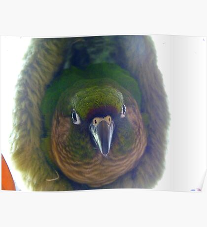 Can Somebody Please Turn The Light Off!!... Maroon-Bellied Conure - NZ Poster