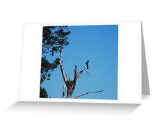 Osprey Nest Building Greeting Card
