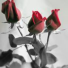 Red Roses by Luis Correia