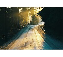 Sunny forest Photographic Print
