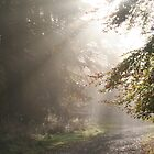 A Misty Autumn Morning In The Forest by Graham Ettridge