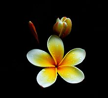 Three Flowers after Rain by Ben Kelly