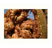 Tree fern Art Print