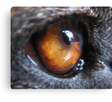 GERMAN SHEPERD DOG EYE Canvas Print