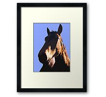 HORSE HEAD  Framed Print