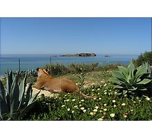 NA759-Relaxing Seaview Photographic Print
