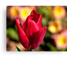 Indulgence - Red Tulip -NZ Canvas Print