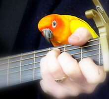 Music Is My Life! - Sun Conure - NZ by AndreaEL