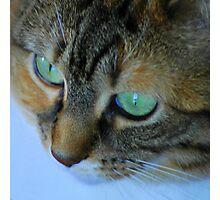 Green Eyes Photographic Print