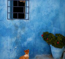 Kasbah Cat Rabat by Scott Harding