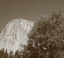 El Cap by Jessica Lynn