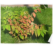 Autumn Leaves of Russet and Green Poster