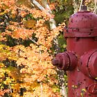 fire hydrant by Anne Scantlebury