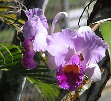 Purple flower by Sue Wickes