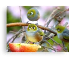 AND SO!!.. Where Is The Better Half?  - Silver-Eye - NZ Canvas Print