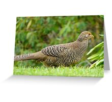Aww Shoot!!.. All The Good Nesting Spots Are Taken!! - Female Golden Pheasant - NZ Greeting Card