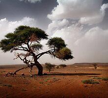 Saharan Acacia by Scott Harding