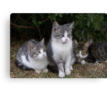 3 kittens Canvas Print