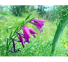 Purple Flowers closeup Photographic Print